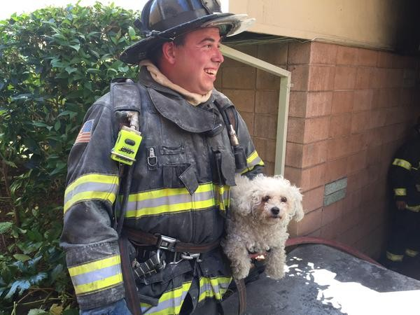 Firefighters Rescue Woman, Dog in Kentfield Apartment Fire